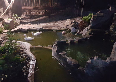 Ducks-at-night