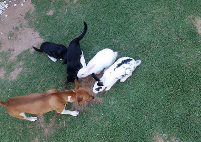 Rabbits-Cats-and-Dogs